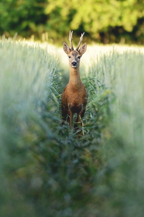 ...deer in the headlights???    : )