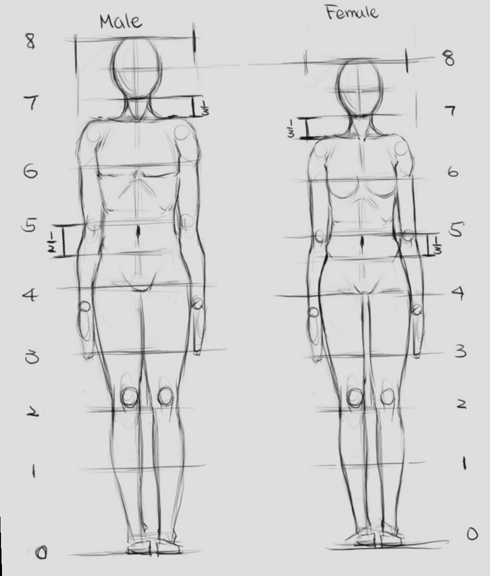 10 Anime Face Proportions Sketch Drawing Body Proportions Proportion Art Body Proportion Drawing