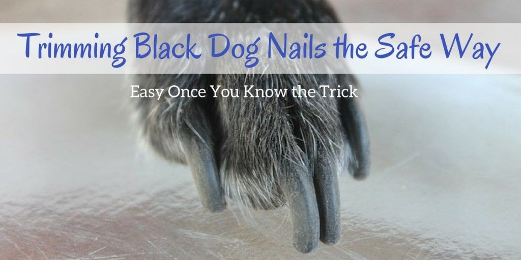 Trimming Black Dog Nails the Safe Way. Easy Once You Know