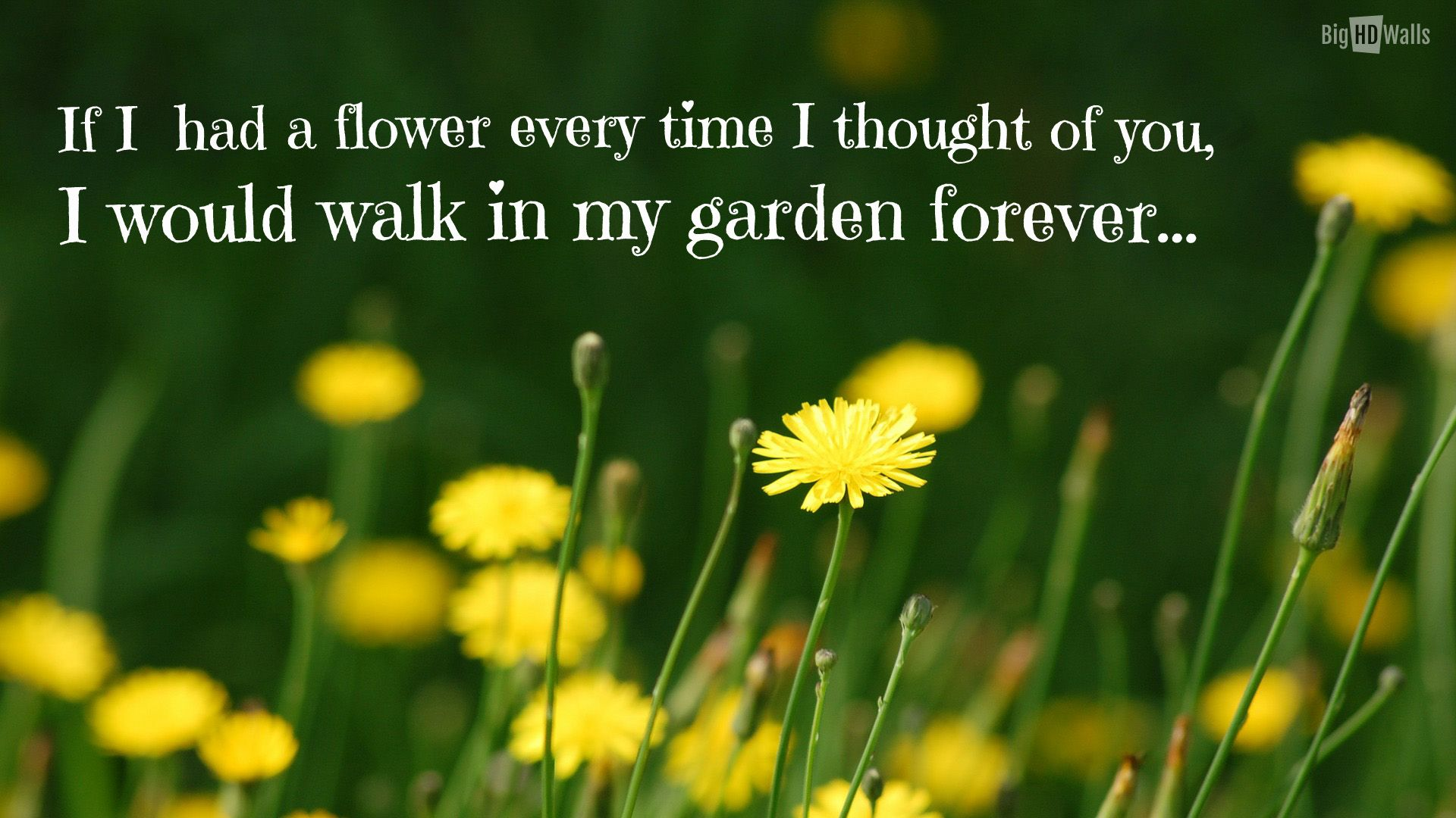 Flower Quotes About Life Google Search Flower Quote Pinterest