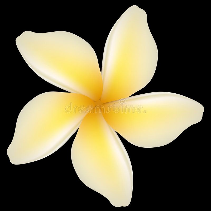 Flower Vector Illustration Of A Plumeria Flower Affiliate Vector Flower Illustration Flower Plumeria Ad Flowers Flower Template Plumeria