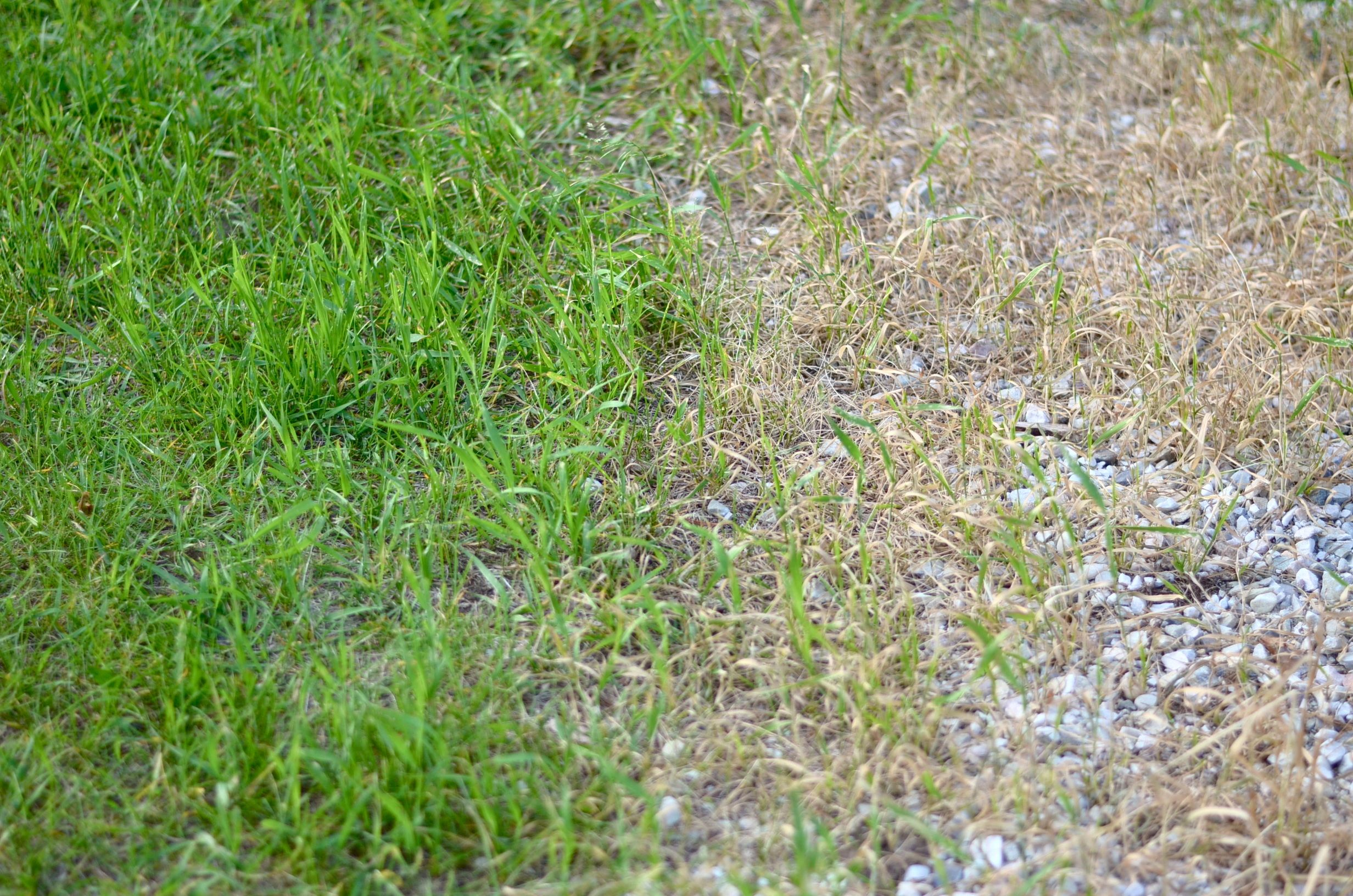 Dsc how to kill weeds grass naturally without chemicals my