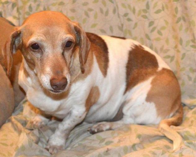 Adopt Quinn On Animals Basset Hound Animal Shelter