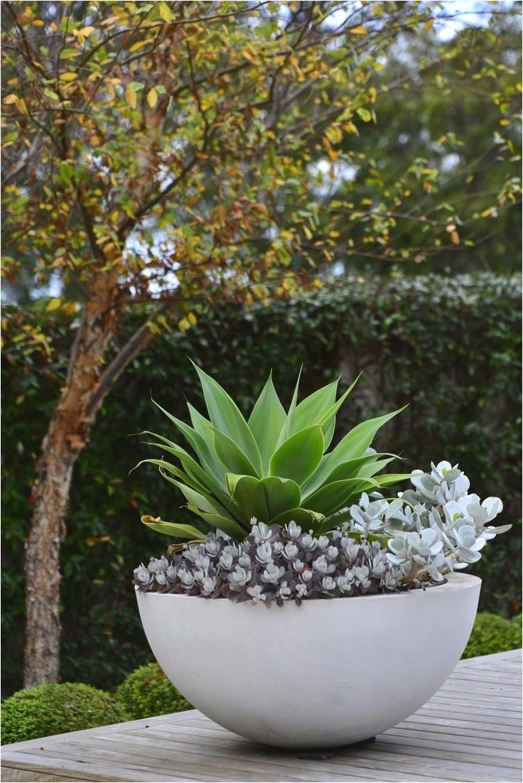 25 Ideas for Garden Pots and Containers Potted plants