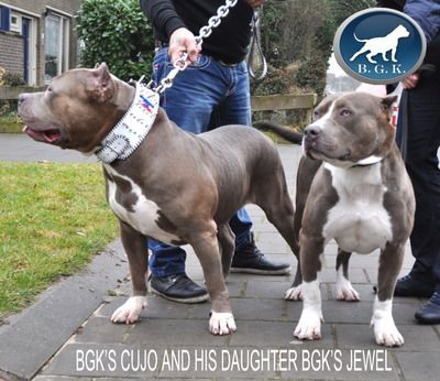 Beautiful Creatures Of This Earth Pitbull Terrier Big Dogs