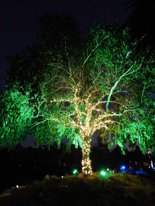 Nice Night Garden Light Ideas https://gardenmagz.com/night-garden ...
