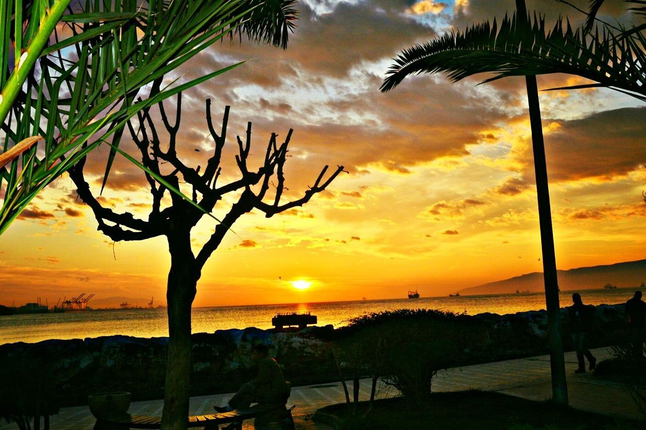 Sunset Tree Beauty In Nature Sky Silhouette Nature Scenics Cloud Sky Palm Tree Tranquil Scene Sea Tree Trunk Tranquili Sunset Scenic Views Scenic Palm trees sunset horizon sky clouds