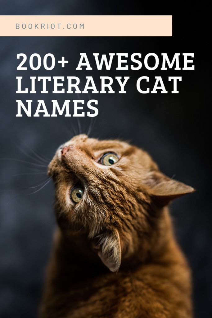 200+ Literary Cat Names For Naming Your New Pet Cat