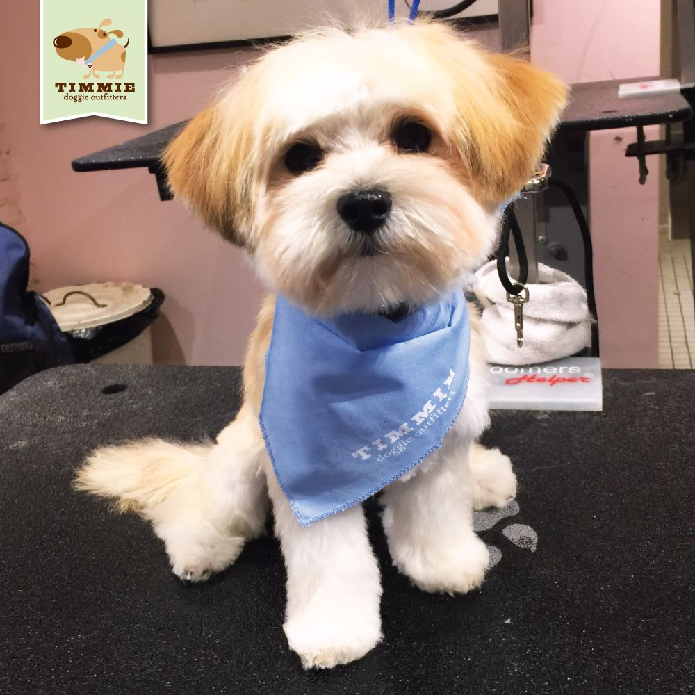 Joey came by for his very first groom what a cutie