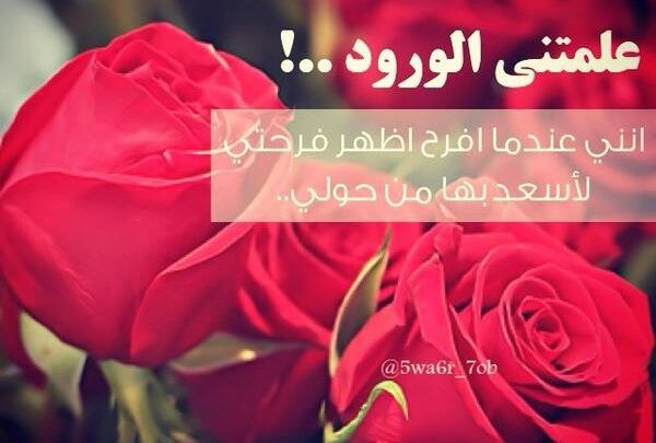 10 عبارات عن الورد الأحمر وحالات للواتس معبرة ونابعة من القلب Rose Plants Flowers