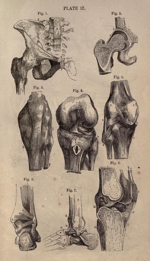 Systematic human physiology, anatomy, and hygiene: - Biodiversity ...
