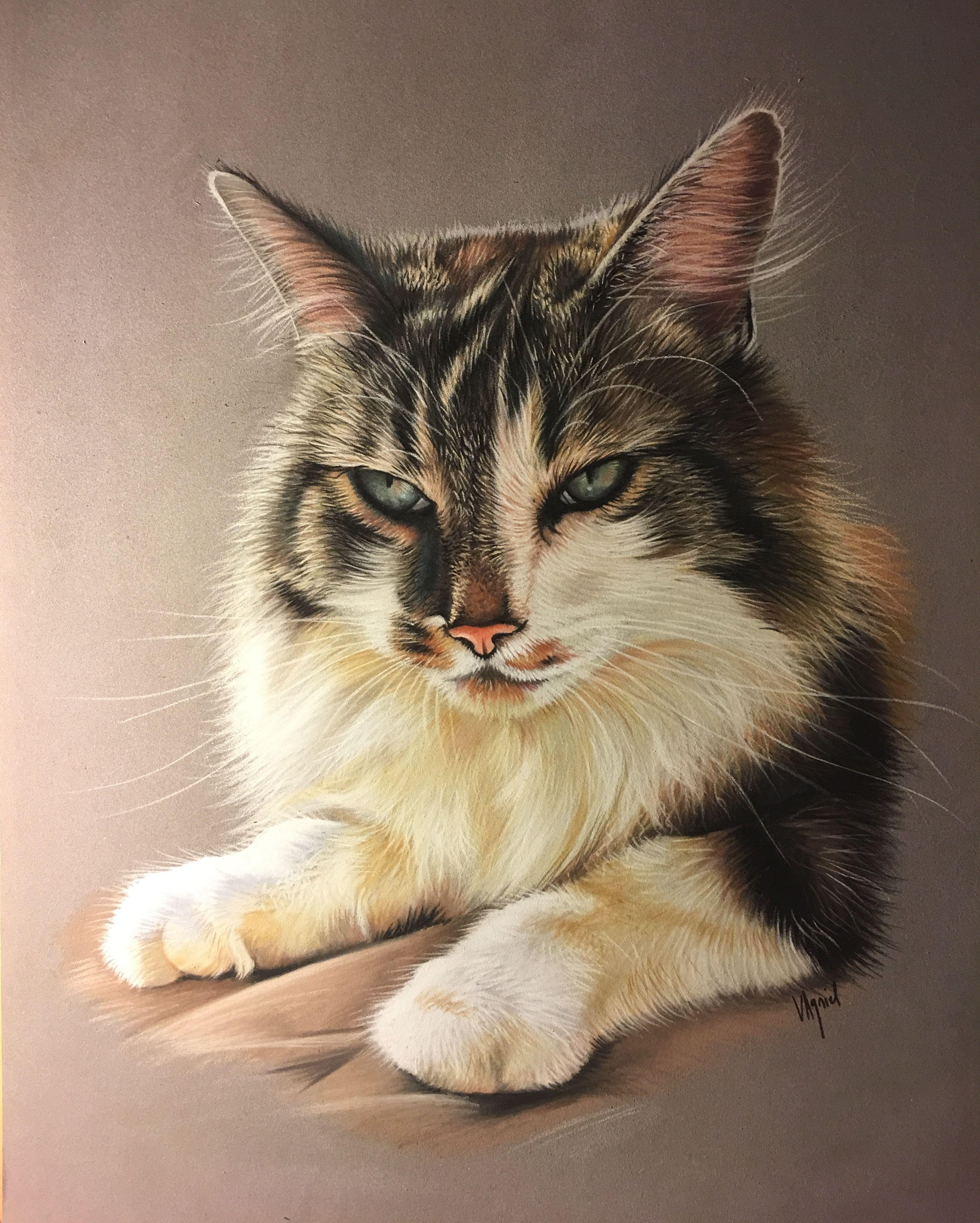 Chat Tigre Et Blanc Tiger Cat Pastel Dessin En 30 Par 40 Cm Art Animalier Artiste Animalier Dessin Animalier Artanimalier C Chat Tigre Dessin Chat Animaux