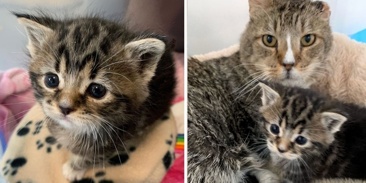 Rescued Kitten Won T Stop Crying Until Grandpa Cat Takes Her Under His Wing Love Meow Kitten Rescue Cat Cuddle Cat Training