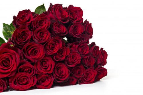 اجمل باقة ورد في العالم اجمل باقة ورد بالصور Zina Blog Flowers Rose Plants