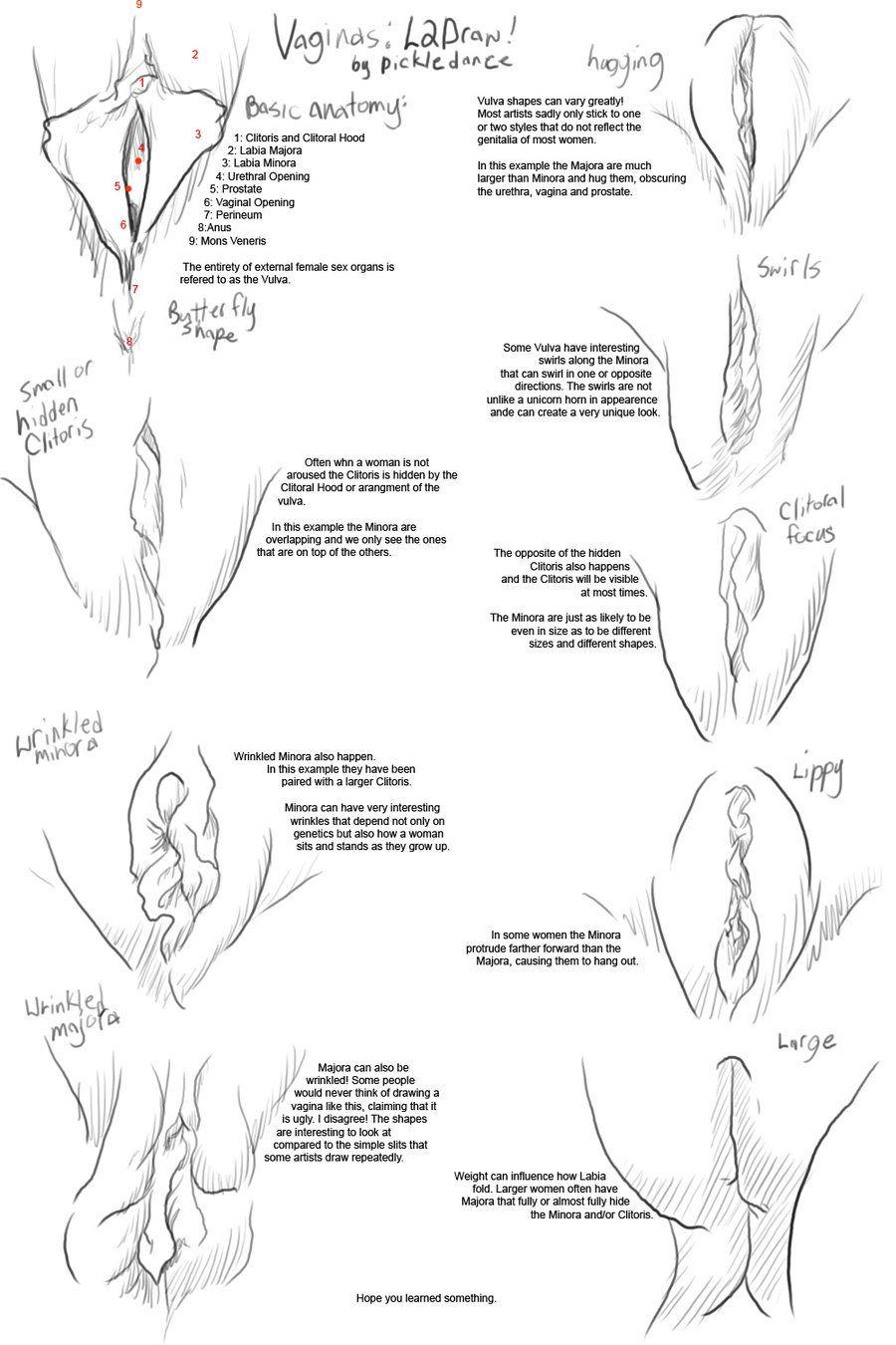 Как рисуется вагина фото 696-654