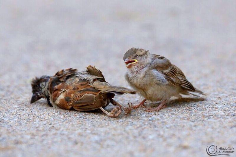 النصار يحقق المركز الأول للتصوير الفوتوغرافي في جائزة آل ثاني شبكة سما الزلفي Bird Baby Bird World Best Photos