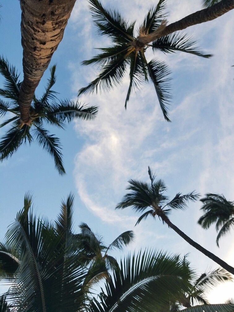 Palm Trees Shopicon Inspo Vacation Fotografi Alam