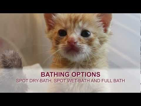 Orphaned Kitten Care How To Videos How To Bathe An Orphaned Kitten Youtube Kitten Care Kittens Puppy Care
