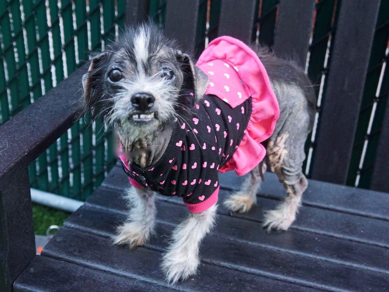 Elvira ID 44080 Dog Manhattan Animal Care Center