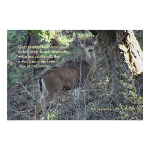 Thanks, Jan, (London, United Kingdom) for buying the Famous Words: Laws – Deer – Poster Enjoy! -Martie (Blue Beach Song)   http://www.zazzle.com/famous_words_laws_deer_poster-228666494178591164?media=premium_canvas_matte&ratio=1.5&rf=238706427652551388