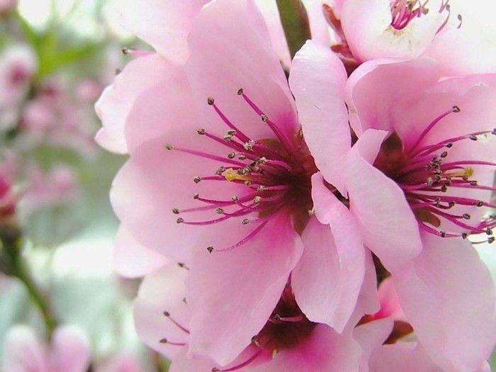 fonds d 39 cran printemps qui vont inspirer votre journ e jolies fleurs flowers. Black Bedroom Furniture Sets. Home Design Ideas