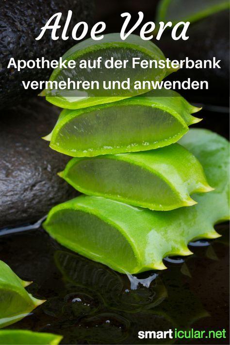 apotheke auf der fensterbank aloe vera vermehren und anwenden garten pinterest aloe vera. Black Bedroom Furniture Sets. Home Design Ideas