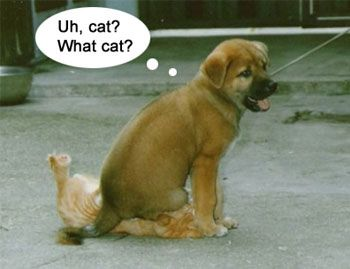 Cute and funny dogs and cats together pics (part 2 ... Funny Pics Of Cats And Dogs Together