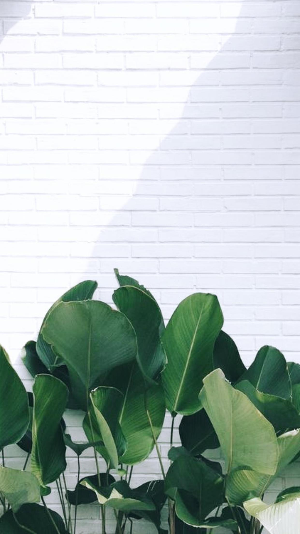 ʜʏɢᴡᴀᴛ Leaves wallpaper iphone, Plant wallpaper, Green