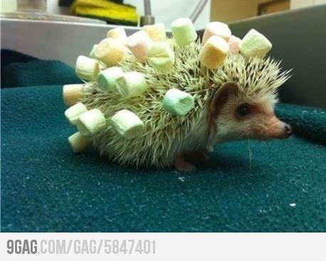 He Put Marshmallows On My Spikes Again Didn T He Susseste Haustiere Igel Illustration Igel Im Garten