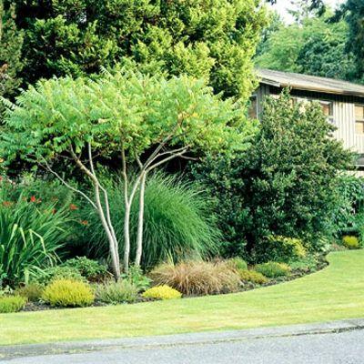 die besten 17 ideen zu pampasgras zurückschneiden auf pinterest, Garten Ideen