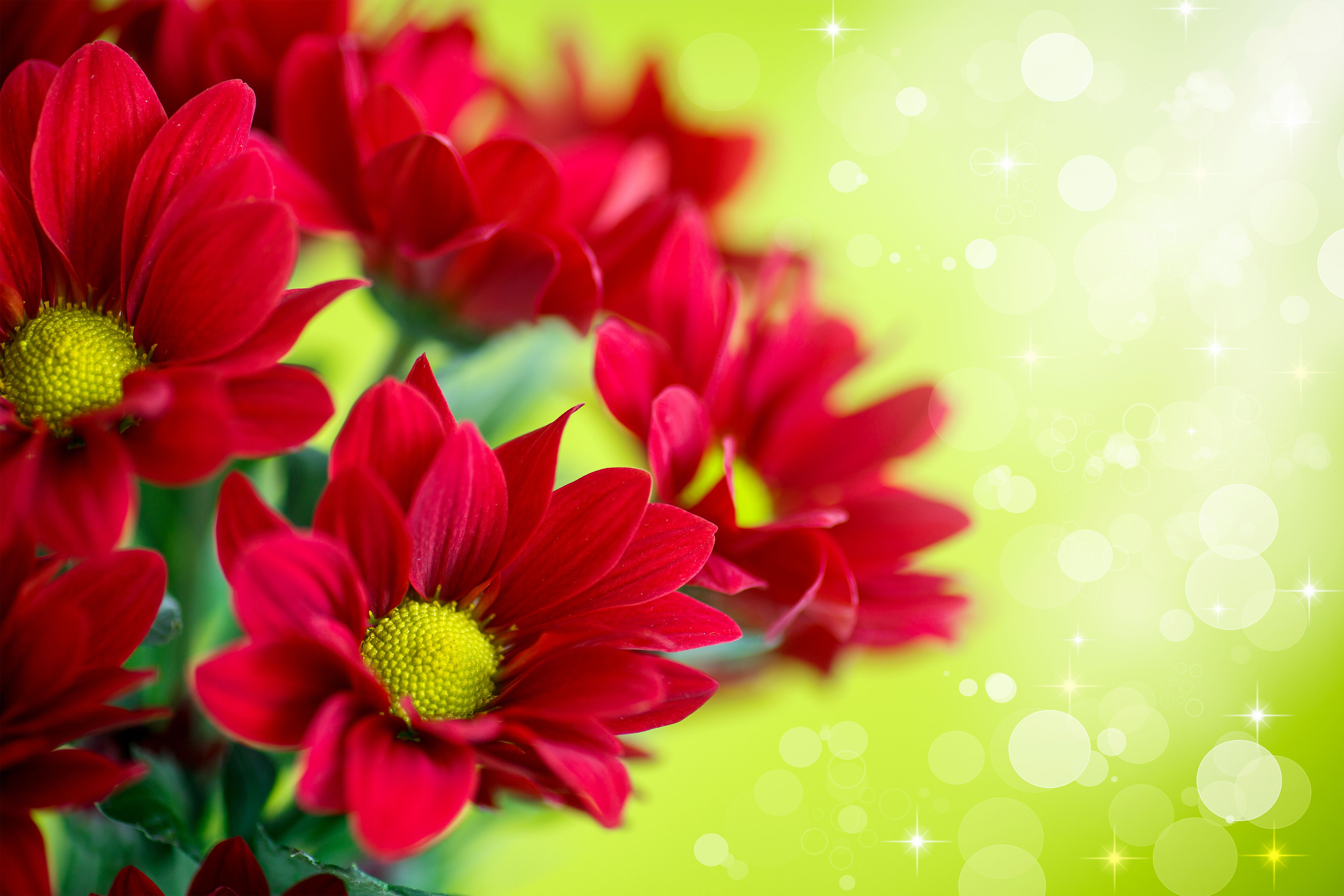 Dream Red Floral Background Free Vector Download Free Flower Backgrounds Floral Background Red Flowers