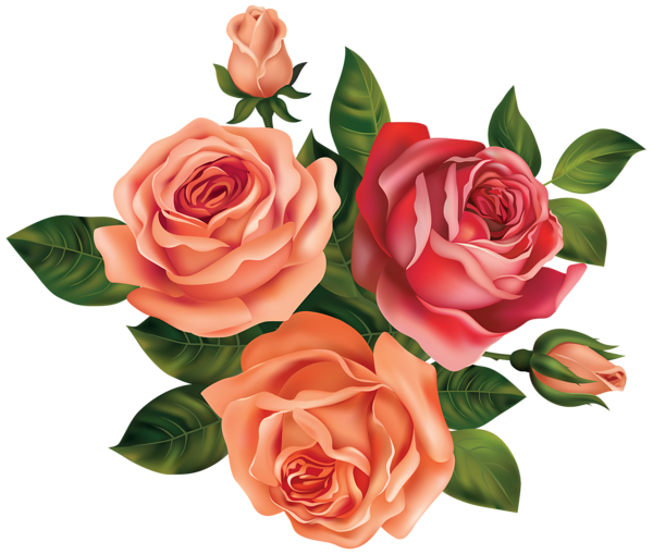 Beautiful Roses Clipart Image Flower clipart, Flower