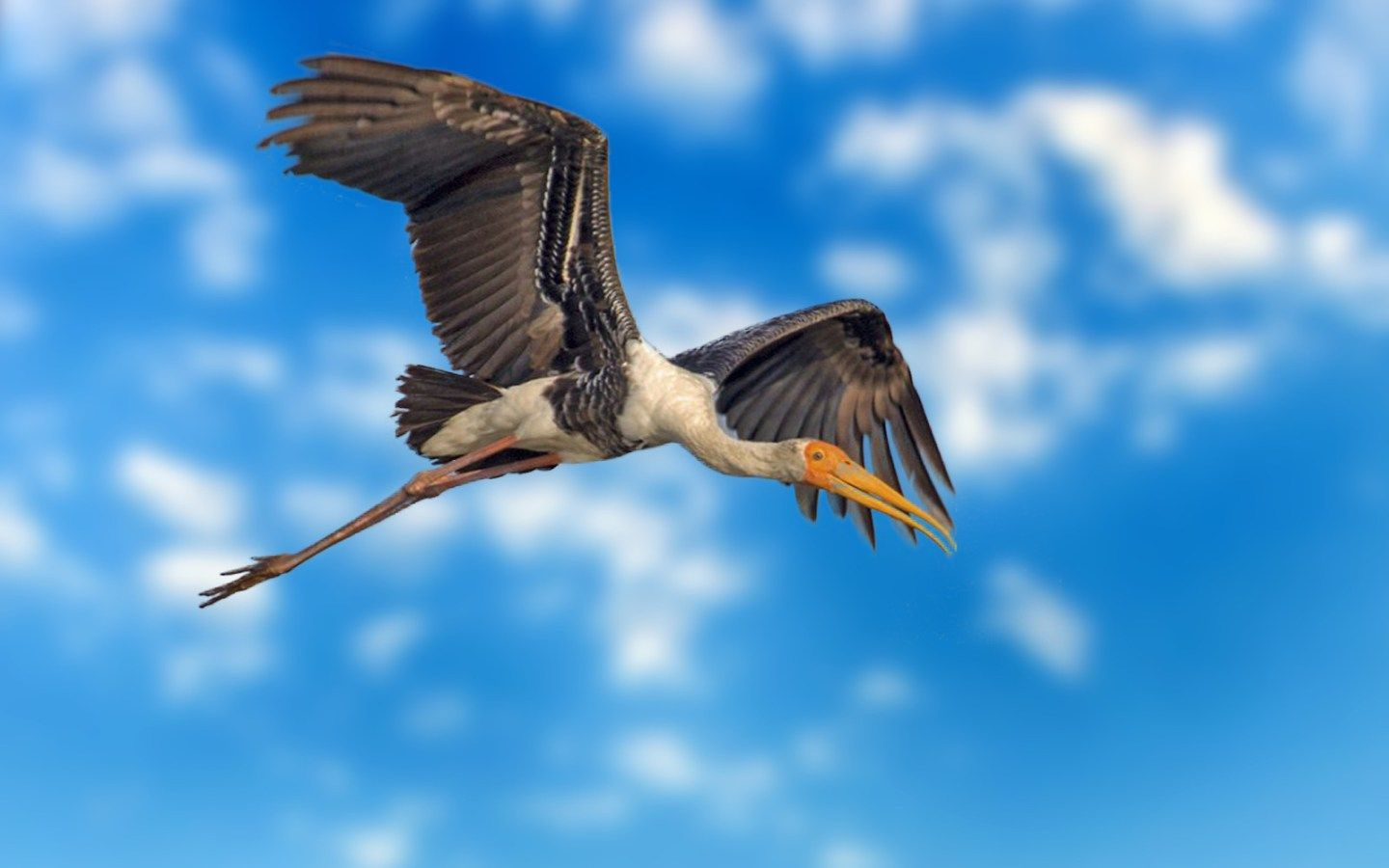 Painted Stork In flight Bird Download HD DesktopMobile Wallpaper