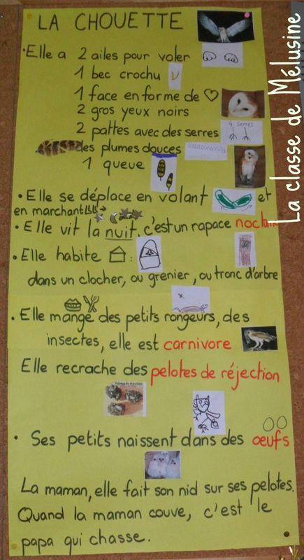 La Carte D Identite Du Hibou Et De La Chouette La Classe De