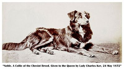 Noble One Of Queen Victoria S Favorite Collies 1800s English
