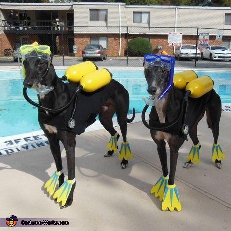 100 Creative Diy Costume Ideas For Dogs Dog Halloween Best Dog