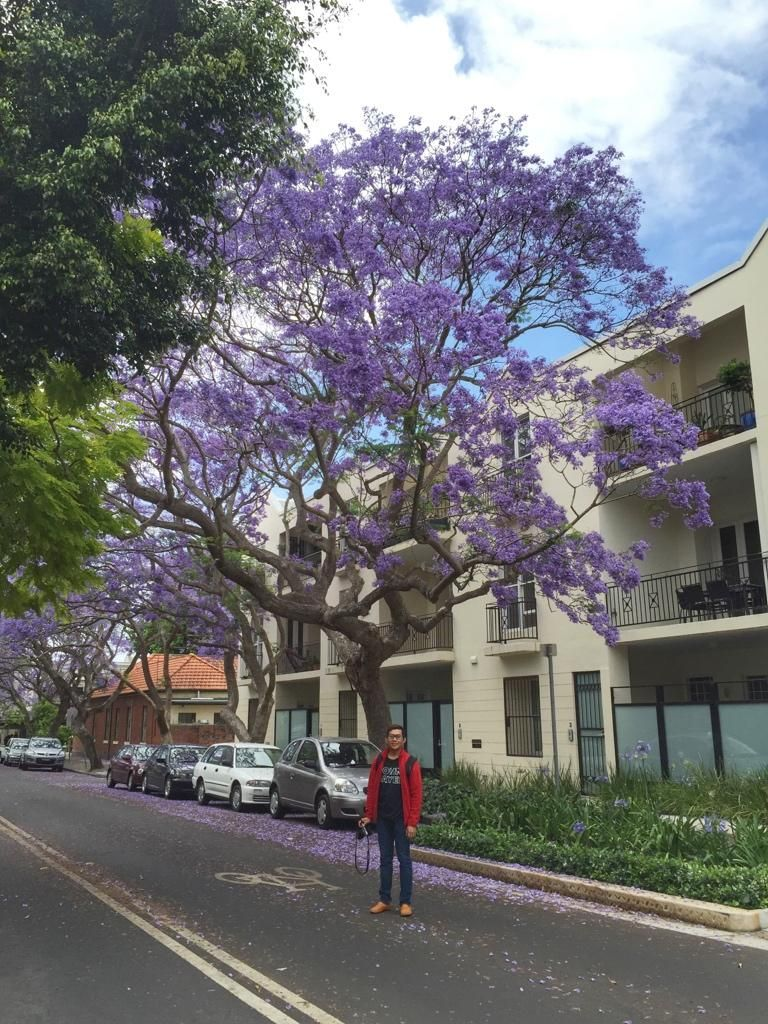 Spring in Sydney is always awesome especially with these Jacaranda trees. Hey, @jovitaayu, lookie! :)) #SeeAustralia