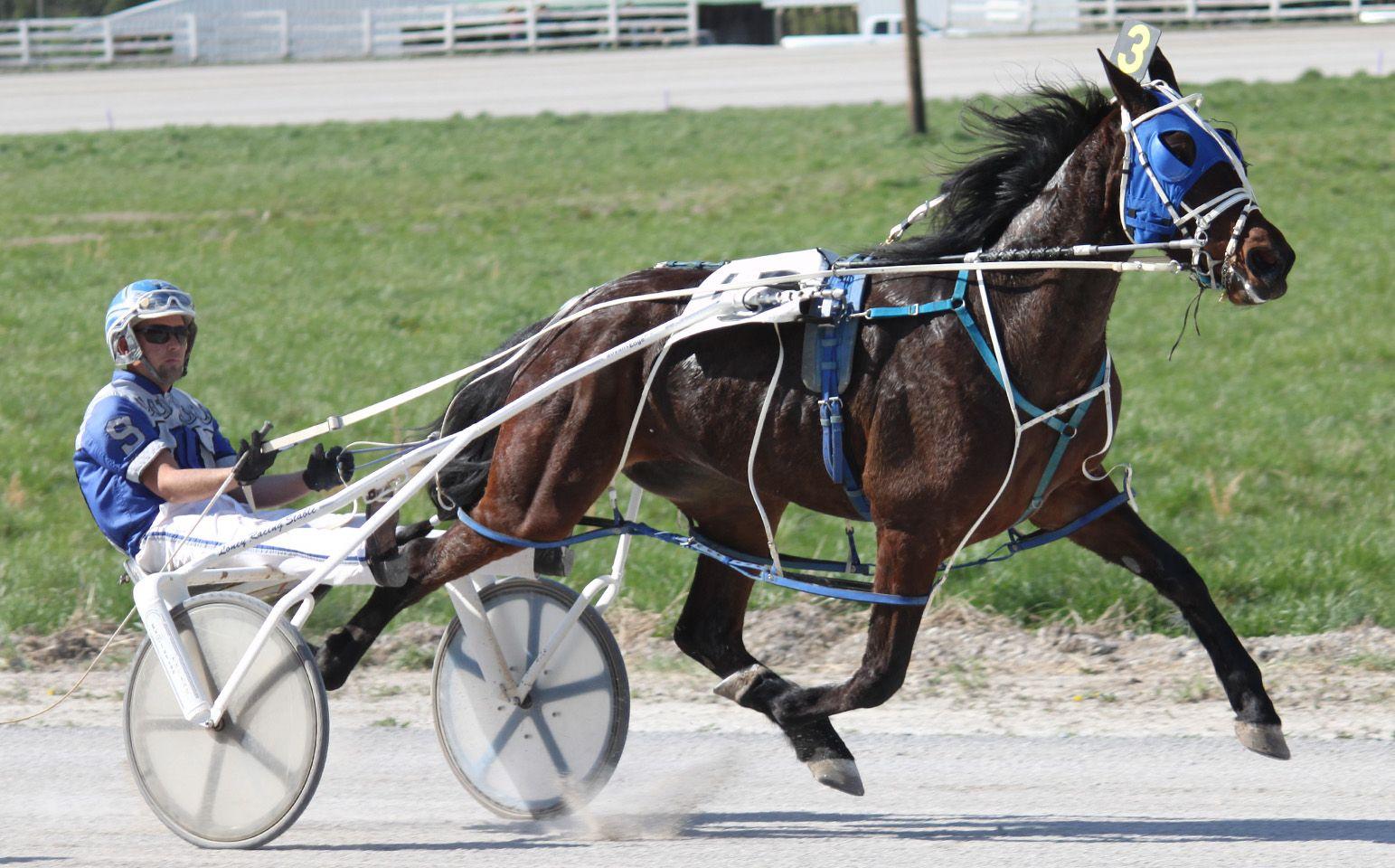 77bb0377f7131df4d235c71e5b1ba2df harness racing bluegrass harness racing horse buggy harness racing news at soozxer.org