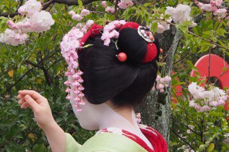 Maiko Hisamomo- custom cherry blossom kanzashi, April 2015 P4110017.jpg