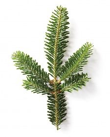 TYPES OF TREES....Christmas Trees & Ornaments - Martha Stewart Holidays