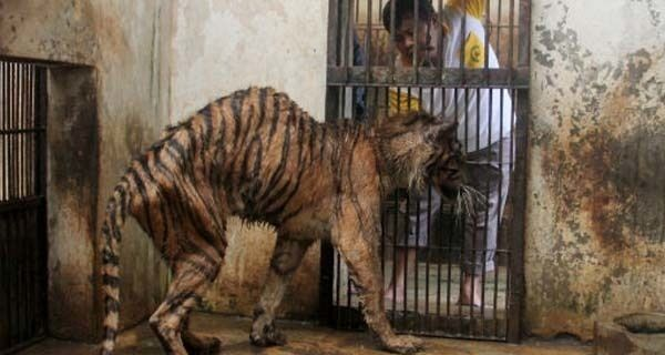 They Call This The 'Zoo Of Death.' And Here's Exactly Why It Needs To Be Shut Down.