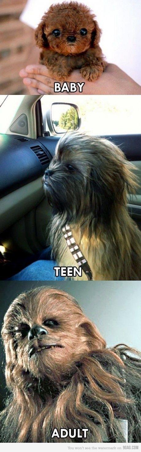 Chewbacca Grows Up Star Wars Star Wars Humor Star Wars Memes Star Wars Jokes