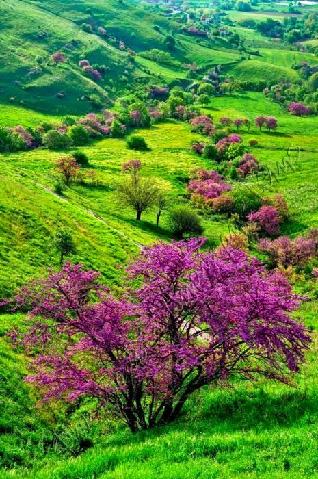 Spring - Koutsoupia, Greece - I wonder what kind of trees these are