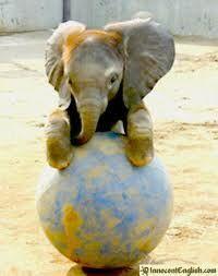 Cute little fella!!!