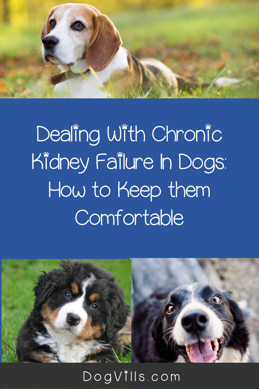 Dealing With Chronic Kidney Failure In Dogs How To Keep Them Comfortable Dogvills In 2020 Chronic Kidney Failure Dogs Chronic