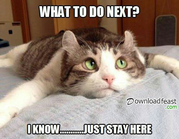Funny Meme Upload : Check out the funny cute and funny cat meme on downloadfeast.stay