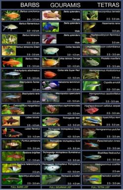 All Types Of Tetra Fish Freshwater Aquariums Fish Etc