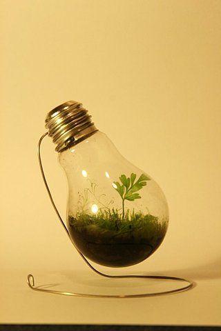 Environmental Support With Light Bulb Recycling Walyou Light Bulb Terrarium Diy Greenhouse Light Bulb Art