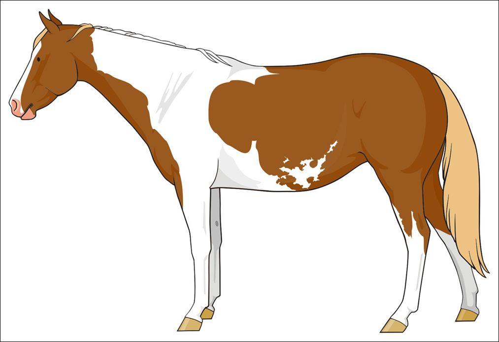 tobiano/sabino | Drawing horses 104: pintos | Pinterest | Horse ...