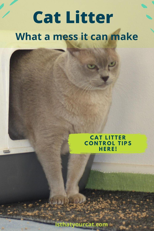 Keep Cat Litter Under Control In 2020 Cat Litter Cats Litter
